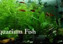 Aquarium Fish, Aquarium Fish Shop in Nepal, Aquarium Fish Full Setup in Nepali by Onic Computer